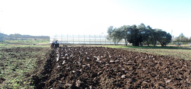 Crowdmanaged farm offers participants a share of the crop