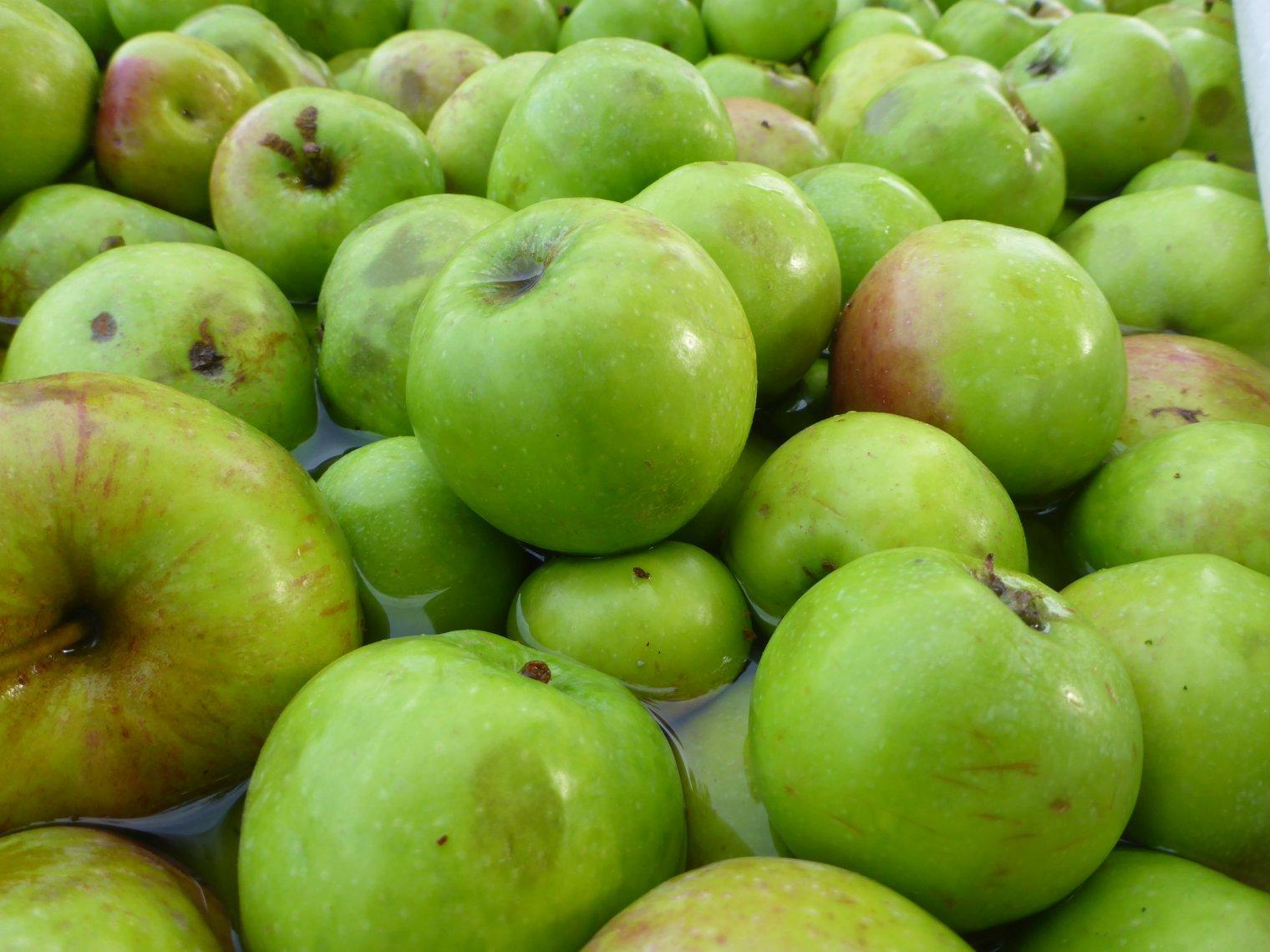 Alte Apfelsorten schützen von Allergiesymptomen